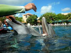 Dolphin Discovery Riviera Maya,dolphin lunch time!