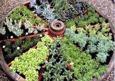 herb garden in a wagon wheel