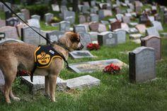 Hartsdale Pet Cemetery Holds War Dog Memorial Ceremony - Pictures - Zimbio