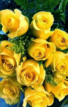 Yellow roses, also in my wedding bouquet. Love these flowers. Beautiful Rose Flowers, My Flower, Beautiful Flowers, Beautiful Scenery, Beautiful Bouquets, Climbing Roses, English Roses, Mellow Yellow, Yellow Flowers