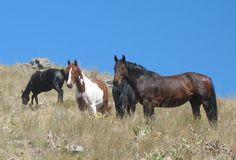 Vacation Trips, Vacation Spots, Vacation Ideas, Flathead Lake Montana, Martagon Lily, Island Horse, Echo Lake, Big Sky Country, Mule Deer