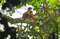 Rare Primate Photographed for the First Time - Wildlife Conservation Society