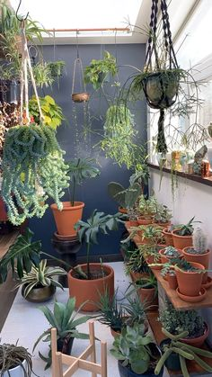 , Creating a sacred space for self-care not only provides you a place of sanctuary from the hustle of day to day life, but is essential to your well-bei. , A sacred space for self-care Exotic House Plants, Easy House Plants, House Plants Decor, Plants On Balcony, Living Room Plants Decor, Decoration Plante, Tropical Decor, Tropical Patio, Tropical Interior