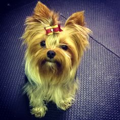 Boo at her pet therapy class. A blog post on how to create a bark pack visiting kit.