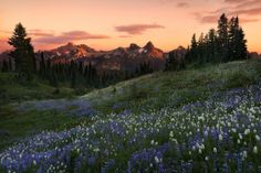 banshy:  Mt. Rainier National Park // Majeed Badizadegan