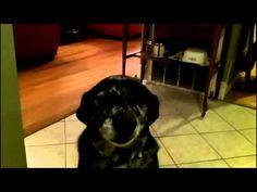 ▶ Guilty Dog, Buffy II - YouTube