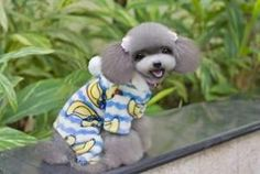 Colorful Christmas Gifts Pet Products Dog Clothes (H-045) on http://www.aliexpress.com/store/1379660