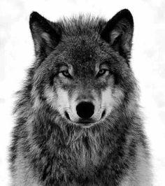 Pro-Wolf North West