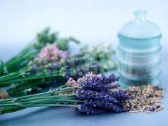 Cut Lavender, Dried Lavender & Glass Pot Photographic Print by Lynn Keddie at Art.co.uk