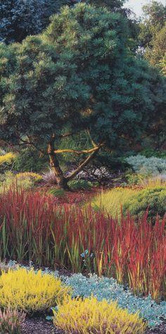Die 559 besten bilder von grass gartenpflanzen - Gartenpflanzen straucher ...