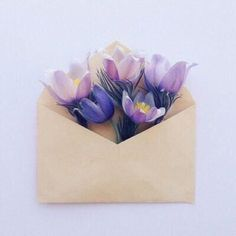 Flowers in envelope.use pressed flowers or handmade floral pulp paper My Flower, Flower Art, Beautiful Flowers, Flower Beds, Bouquet, No Rain, Foto Art, Paper Flowers, Purple Flowers
