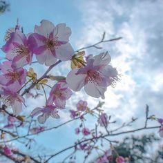 【rtb.koji】さんのInstagramをピンしています。 《『春先取り』 、 松山城には桜が咲いてた😳 、 、 、 location:Ehime.jpn【松山城】 、 #愛媛県 #桜 #松山城  #bestphoto_japan  #japan_daytime_view  #phos_japan  #japan_of_insta  #photo_jpn  #lovers_nippon  #setouchigram38  #s_shot  #wp_japan  #wu_japan  #bestjapanpics  #igs_asia  #icu_japan  #ig_japan  #ig_alls  #カメラのキタムラ写真投稿  #写真好きな人と繋がりたい  #写真撮ってる人と繋がりたい  #ファインダー越しの私の世界  #igersjp  #nikon  #nikond810  #kf_gallery  #wp_flower  #team_jp_  #pkt_japan  #japan_art_photography》