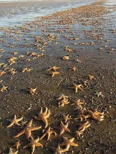 Starfish on a beach in Maine