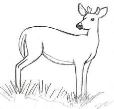 Image Result For Simple Line Drawings Of Deer With Images Deer