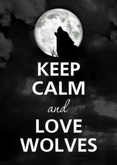 Keep calm and love wolves The woves are a special art of animals , they are a wonderful and beautiful creature of the world. Keep Calm Posters, Keep Calm Quotes, Wolf Spirit, My Spirit Animal, Beautiful Wolves, Animals Beautiful, Of Wolf And Man, Dark Romance, Wolf Stuff