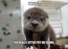 Just doing some otter stuff - Imgur