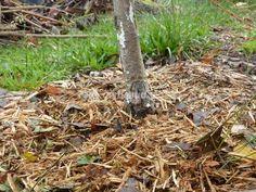 Quels engrais naturels et bio apporter aux arbres fruitiers ? Comment et quand fertiliser ? Conseils pour enrichir le sol en vue de belles récoltes.