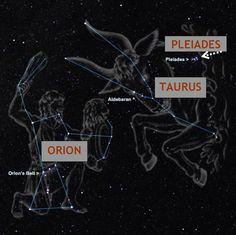PLEADIAN – Intl. Starseed Network