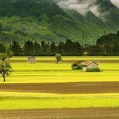landscape, meadow, field, mountains