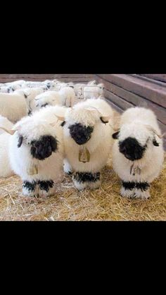 Får...such cute sheep. I thought they were needle felted creatures at first :)