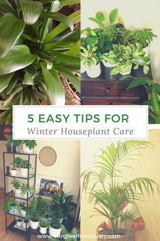 5 Easy Tips for Winter Houseplant Care. In winter plant maintenance is a little 5 Easy Tips for Wint Happy June, Winter Plants, House Plant Care, Houseplants, Indoor Plants, Garden Design, Plant Leaves, Green, Tips