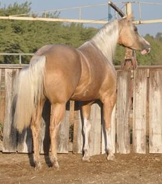 Ranch! Winchester Shotgun, Quarter Horses For Sale, Palomino, Painting, Animals, Ranch, Facebook, American, Guest Ranch
