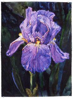 ©Joseph Raffael watercolor, Iris