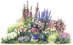Непрерывно цветущая клумба - лето