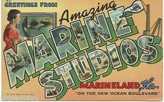 Greetings Amazing Marine Studios Marineland Florida Curteich Large Letter Linen
