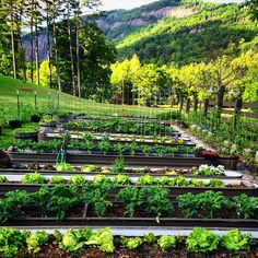 Edible Landscaping: Raised Beds - Kitchen Garden | jardin potager | bauerngarten | köksträdgård  (long galvanized tubs | Canyon Kitchen, Lonesome Valley)
