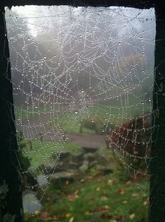 spider web by dyl08, via Flickr