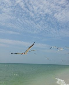 A beautiful view from The Princess! Naples, Bird, Princess, Animals, Beautiful, Animales, Animaux, Birds, Animal