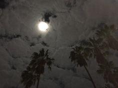 Santa Monica night   Ali Abedi