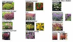 Garden Design Ireland