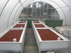 Dream aquaponics and greenhouse system.