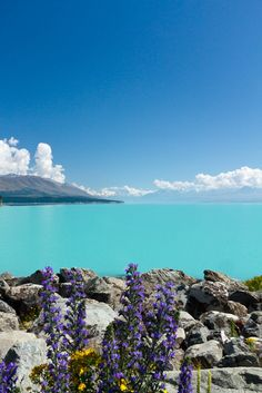 Breathtaking blue waters of Lake Pukaki, New Zealand.