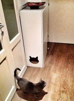 25 idées déco pour cacher la litière de votre chat !