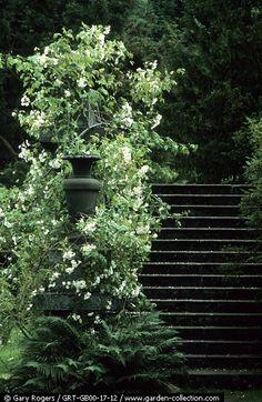 Path | 道路 | Chemin | путь | Sentiero | Camino | Dōro | Pasaje | проезд |  Chatsworth Garden