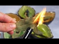 Bay leaf is a medicinal herb mainly used in Indian kitchen, but do you know it has several other benefits too. Find out Benefits Of Burning Bay Leaves. Bay Leaves Uses, What Is Bay, Bay Leaf Benefits, What Happens If You, Shit Happens, Burning Bay Leaves, Sante Bio, Recipes, Wood
