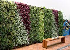 """(Foto: Edu Castello) parede verde de 8 x 2,40 m com ripsális, clorofitos, lambari-roxo, dinheiro-em-penca e antúrios. """"Criamos uma composição com folhagens em diferentes tons e formatos para dar uma sensação de movimento"""", diz Giba. Para montar a estrutura, eles usaram a técnica de Ecoparede, da marca Ecotelhado, em que cachepôs com pontos de irrigação são presos a perfis metálicos."""