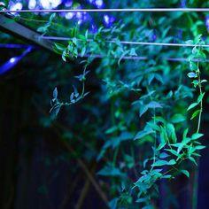 Reflect creeping vines 1 of 3  #vine #green #plant #reflect #natureinspired #garden #mothernature #nature #fresh #trek #photooftheday #livecolorfully #color #instaplant #texture #adventure #summer #travel #closeup #photography #sigma #nikon #nikondf #Brisbane #queensland #Australia #somartcreations #somartupclose #upclose #upcloseandpersonal @somart_creations
