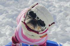 Social Pug Profile | Surf Gidget http://www.thepugdiary.com/social-pug-profile-surf-gidget/