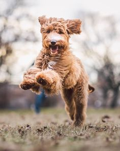 """6,352 Likes, 111 Comments - ZilkerBark 