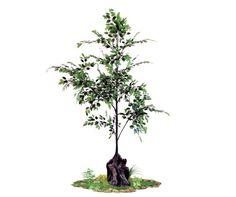artificial banyan tree indoors spacegreen Greenery, Trees, Indoor, Interior, Tree Structure, Wood