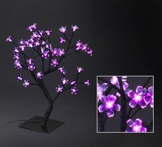 shadow tree light pink for each table