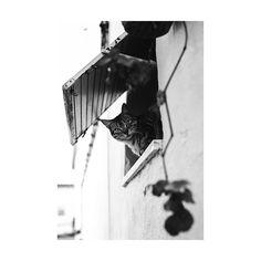 Missino . . . . . Elvas-Portugal . . . #aov #sony #35mm #bn #bw #bokeh #animals #portrait #cat #gato #animales #free #street #urban #instant #expofilm #vsco #adobe #lightroom