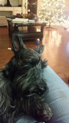 Willie is so sleepy