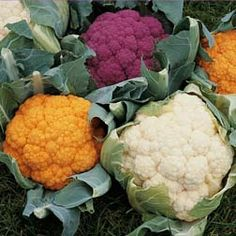 Maybe I'll grow some colorful brassicas next season. Planting Vegetables, All Vegetables, Fruits And Veggies, Cauliflowers, Game Concept, Herbs, Bright, Colorful, Plants