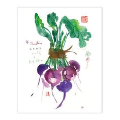 "Purple radish Archival giclee reproduction print from my watercolor illustration. Signed with pencil. Printed on fine art "" BFK Rives "" hot-pressed paper, smooth surface, 140 lb, 100% cotton (acid fre"