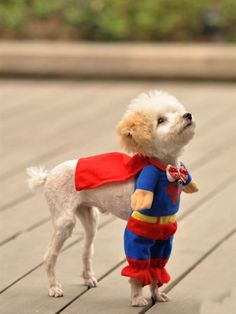 Dont worry. Our hero has arrived #twitburc #dog #cute #superman #lovely #hero